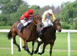 اليوم.. انطلاق مهرجان الخيول العربية الأصيلة بـ