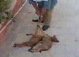 السلطات الصينية تقتل قرابة 5 آلاف كلب