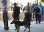 الكلاب البوليسية تفحص