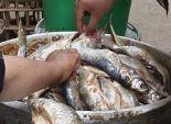 ضبط كمية كبيرة من أسماك
