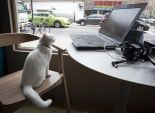 بالصور| افتتاح مطعم يدعو لتبني القطط في نيويورك