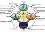 ما نأكله يؤثر على الساعة البيولوجية الداخلية للجسم