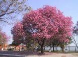 بالصور| شجرة