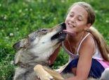 بالصور| الناس فيما يعشقون مذاهب.. أسرة روسية تحول الذئاب إلى حيوانات أليفة