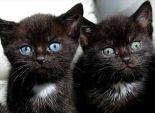 بالصور  الشرطة الإنجليزية تعثر على 15 قطة سوداء داخل حقيبة