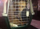 محتال أمريكي يستقبل كلبا مصريا لعلاجه.. فيقتله بعد جمع التبرعات له