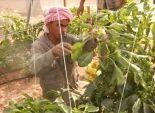 بالصور| منتجات مزارع جهاز تعمير سيناء تغزو الأسواق لمحاربة الغلاء