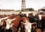 اعتصام تجار الماشية بالوادي الجديد أمام ديوان عام المحافظة