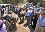 بالصور| توزيع 21 رأس ماشية للأسر المتضررة من حريق