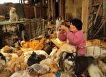 بالصور| امرأة صينية تنفق ألف دولار لإنقاذ 1500 كلب من الذبح